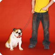 Puppy Pulling On Leash : 自転車のタイヤサイズ 選び方 : 自転車の